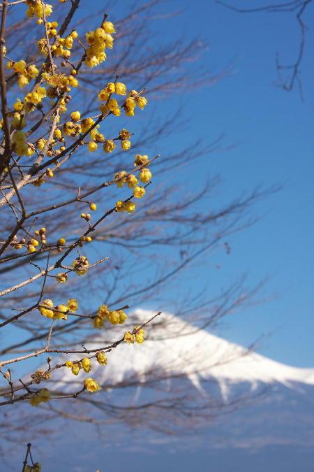 IMG_5645.jpg 岩本山公園-645.-3333jpg.jpg