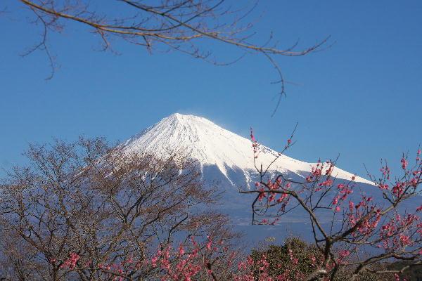 IMG_5647.jpg 岩本山公園-647.-3333jpg.jpg