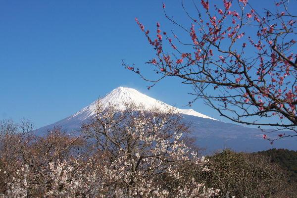 IMG_5660.jpg 岩本山公園-660.-3333jpg.jpg