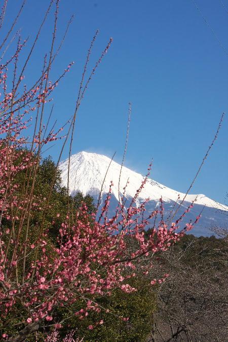 IMG_5682.jpg 岩本山公園-682.-3333jpg.jpg