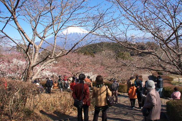 IMG_5677.jpg 岩本山公園-677-3333.jpg