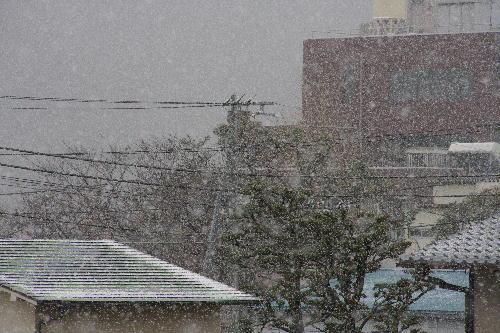 IMG_5915.jpg 2.17-7.44-初雪-3333.jpg