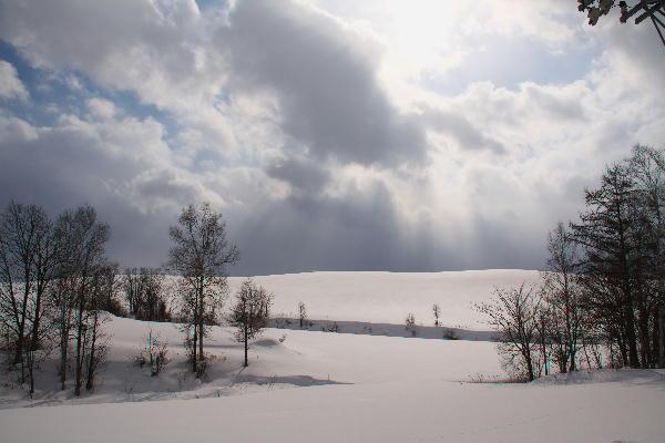 IMG_1166.jpg 雪原の林-166-3333.jpg