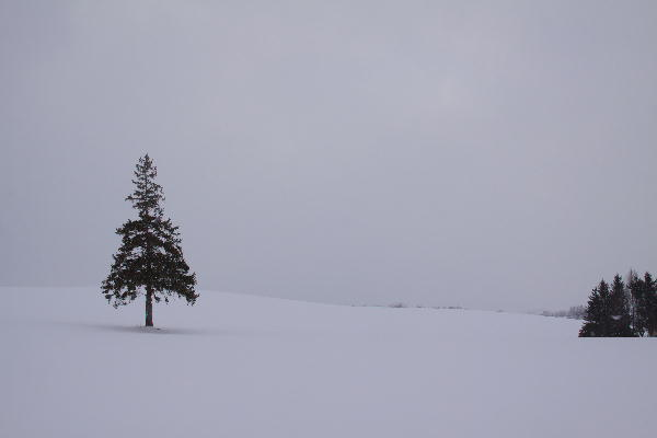 IMG_1197.jpg クリスマスツリーの木-197-3333.jpg