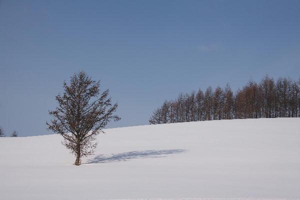 IMG_1387.jpg 絵本の木-387-3333.jpg