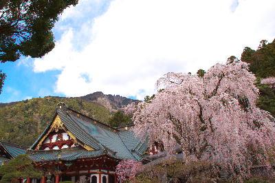 IMG_0415.jpg  身延の桜-415-3333.jpg