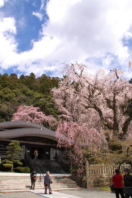 IMG_0456.jpg 身延の桜-456-3333.jpg