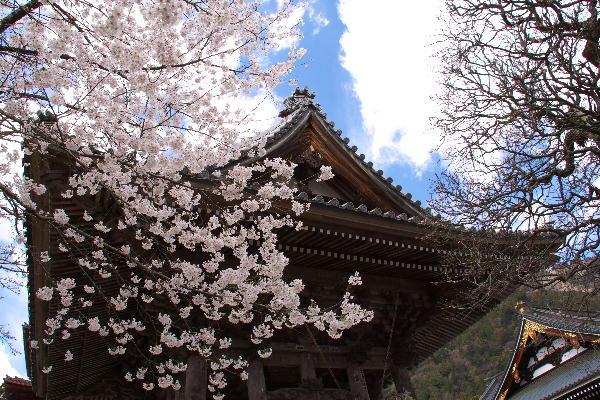 IMG_0435.jpg 身延の桜-435-3333.jpg