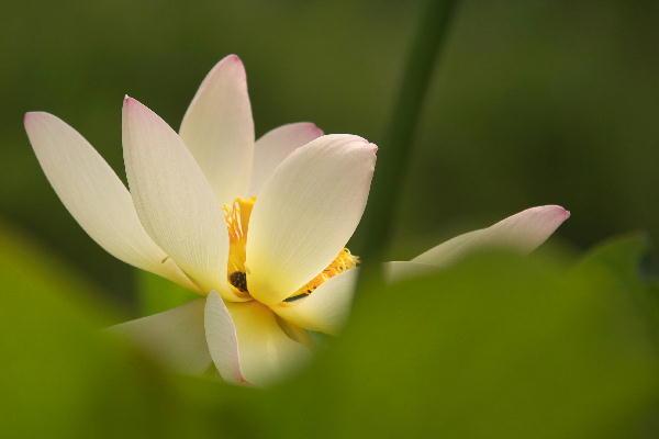 IMG_3152.jpg 蓮の花-152-3333.jpg