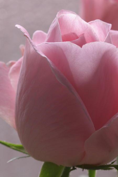 IMG_3248.jpg 薔薇-248-3333.jpg