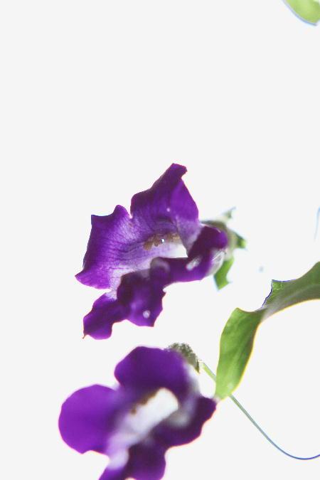 IMG_3710.jpg 紫の花-710-3333.jpg