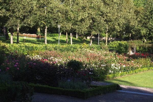 IMG_5413.jpg 薔薇公園-413-3333.jpg