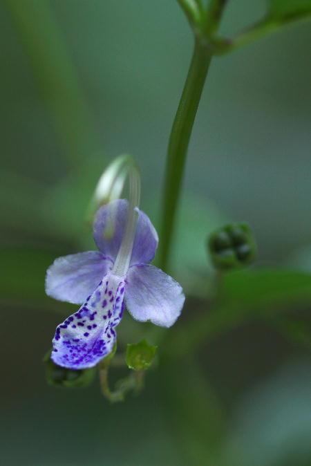 IMG_7641.jpg 紫の花-641-3333.jpg
