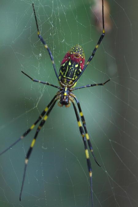 IMG_7673.jpg 女郎蜘蛛-673-3333.jpg