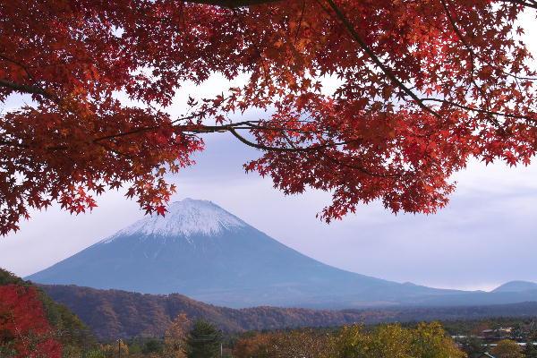IMG_8472.jpg 西湖いやしの里-472-3333.jpg