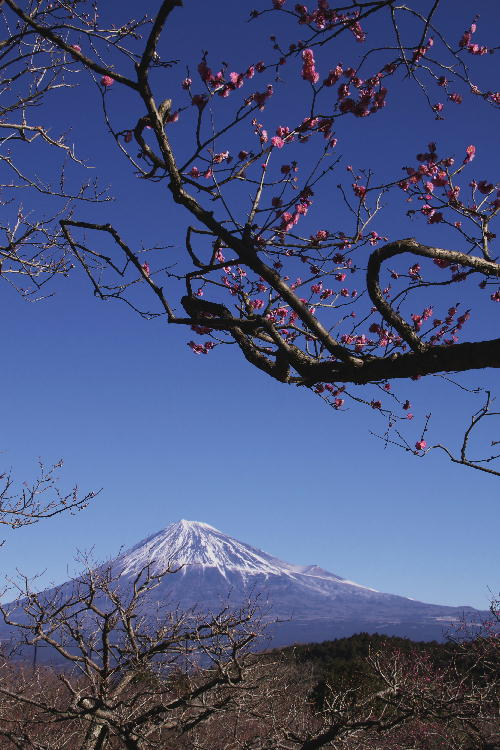 _MG_0248.jpg 岩本山-1.jpg
