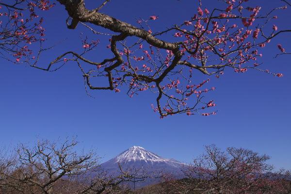 _MG_0251.jpg 岩本山-2.jpg