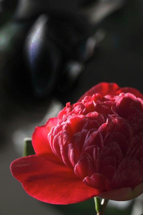 紅朴伴椿.jpg
