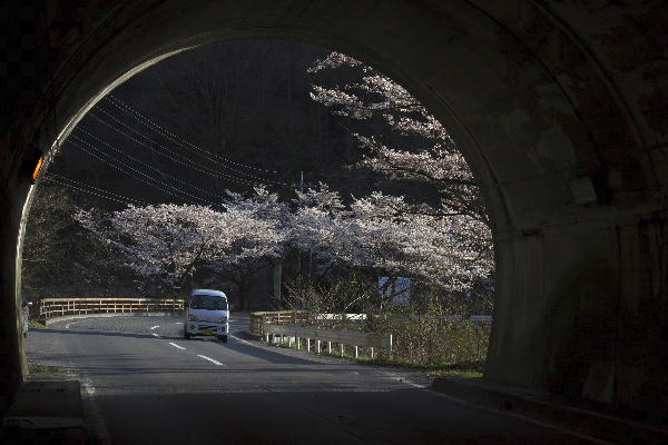 トンネルからの桜.jpg
