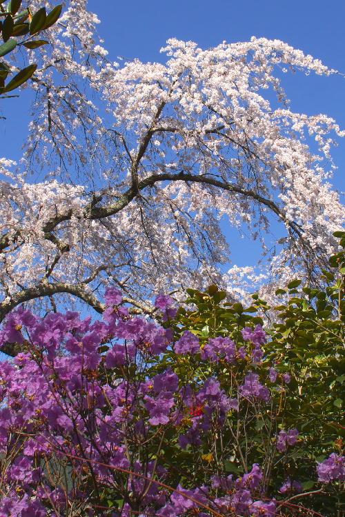 花の寺-1.jpg