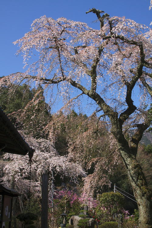 花の寺-2.jpg