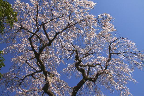 花の寺-3.jpg