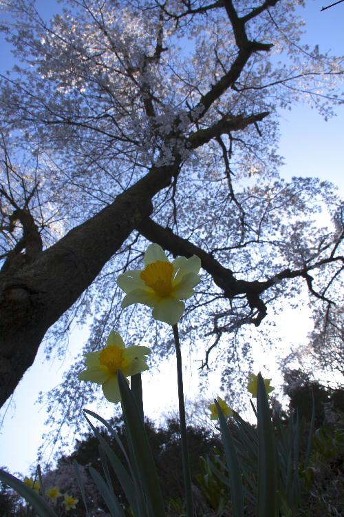 花の寺-4.jpg