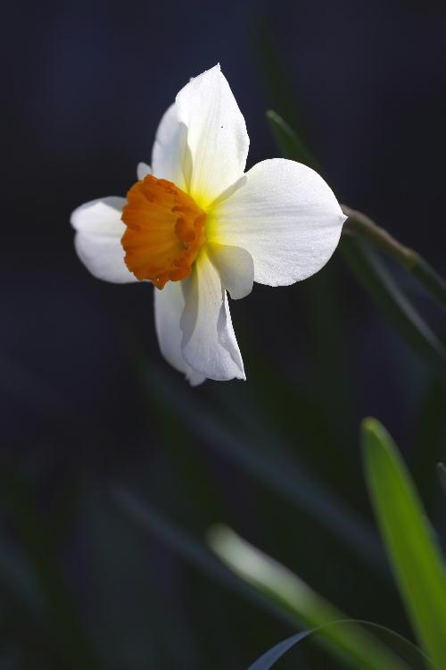 花の寺-5.jpg