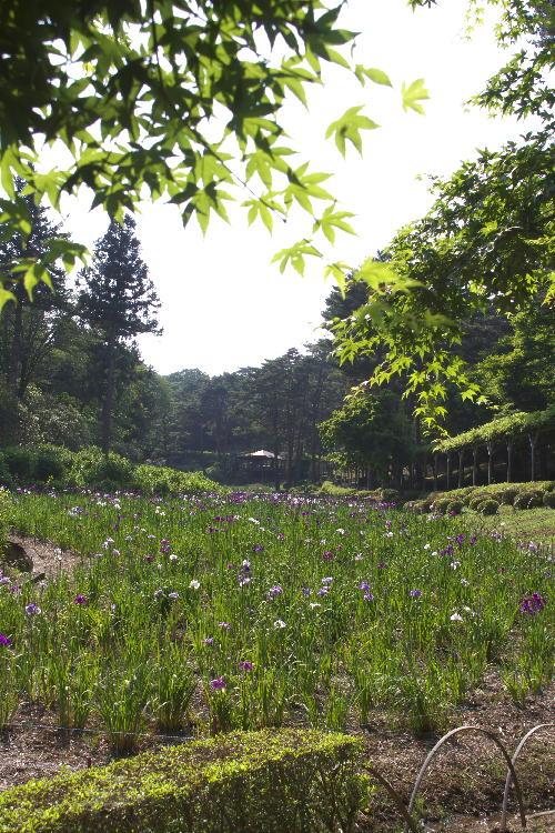 菖蒲園-1.jpg