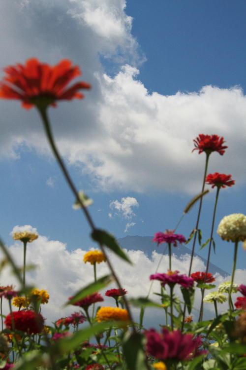 花の都-1.jpg