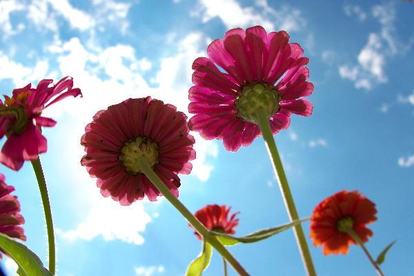 花の都-1 (2).jpg