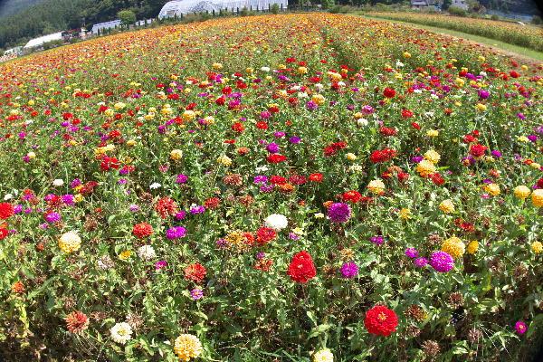 花の都-2.jpg