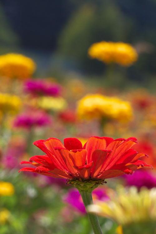 花の都-3.jpg