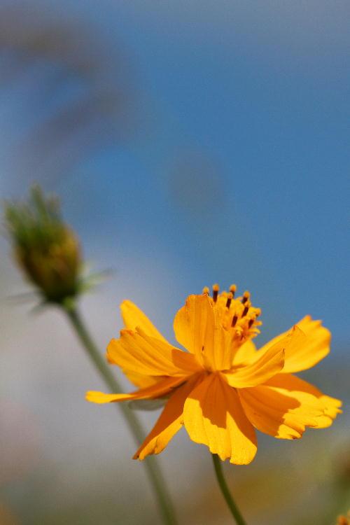 花の都-4.jpg