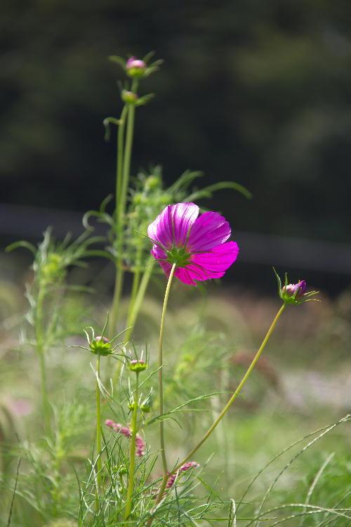 花の都5.jpg