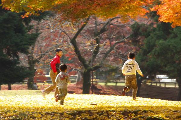 敷銀杏と子供(18.jpg