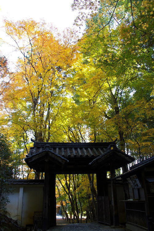 京都-1 竹の寺1(19).jpg
