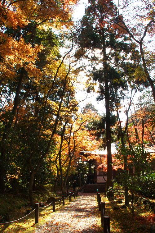 京都-2 竹の寺2(19).jpg