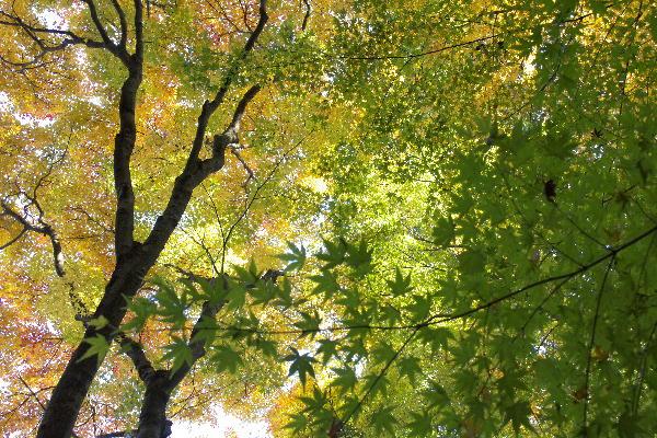 京都-4 竹の寺4(20).jpg