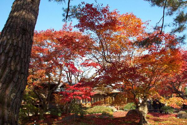 京都-6 宝厳院2(21).jpg