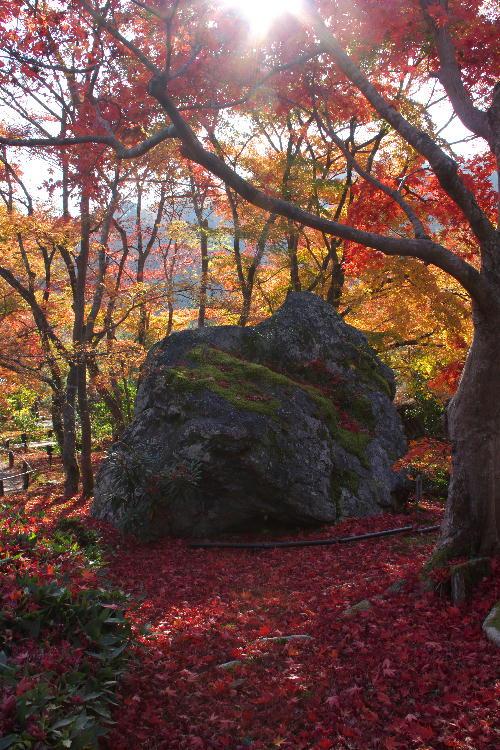 京都-8 宝厳院獅子岩2(22).jpg