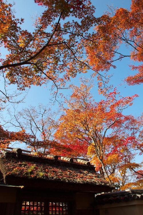 京都-12 宝厳院6(24).jpg