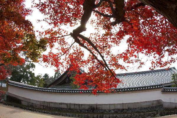 奈良公園-2.jpg