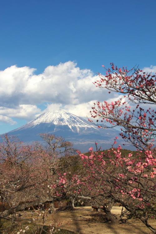 岩本山-1.jpg