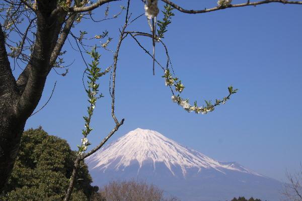 岩本山-桃白.jpg