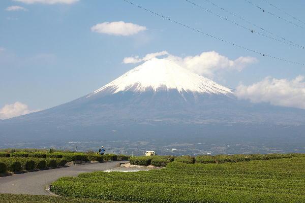 IMG_6127.jpg 富士山とお茶畑-127-3333.jpg