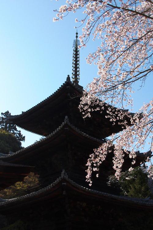 三井寺-20.jpg