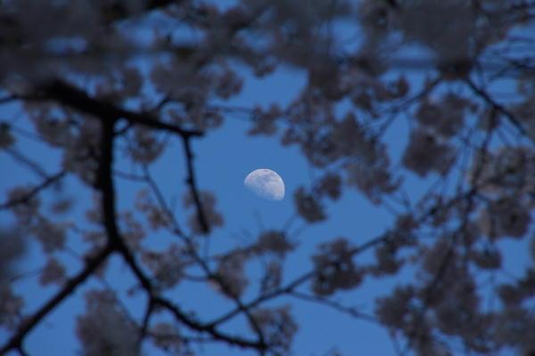 月-24.jpg