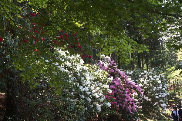 石楠花-1.jpg