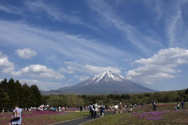 芝桜-5.jpg